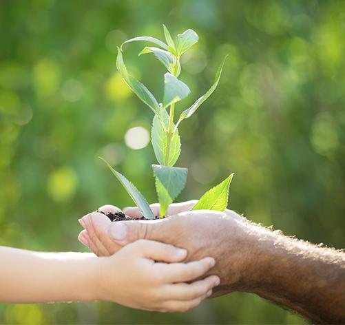 Mãos seguram planta sob fundo verde.