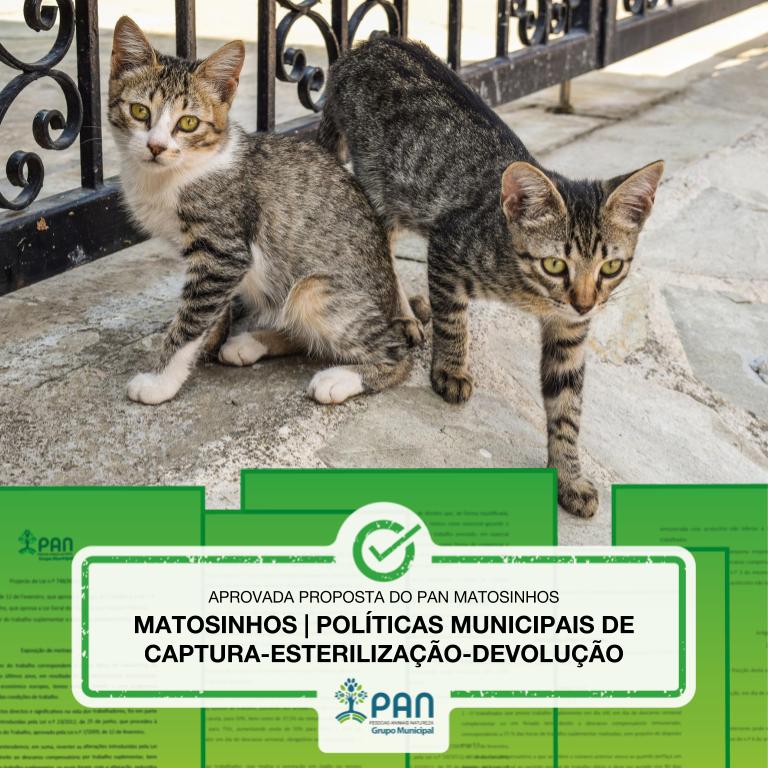 Matosinhos | Políticas Municipais de Captura - Esterilização - Devolução