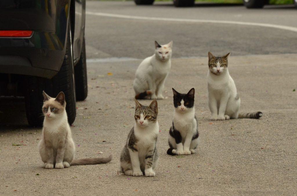 Colónia de gatos na rua