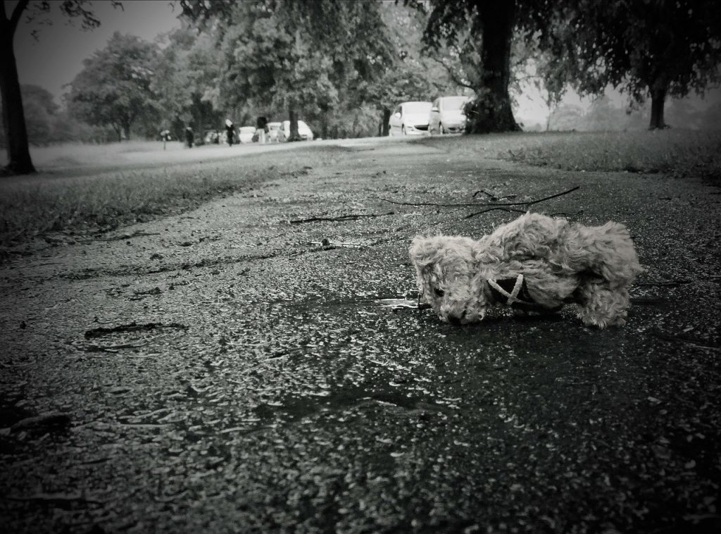 Urso perdido