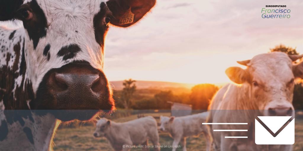 Carta carnes e lacticínios FG