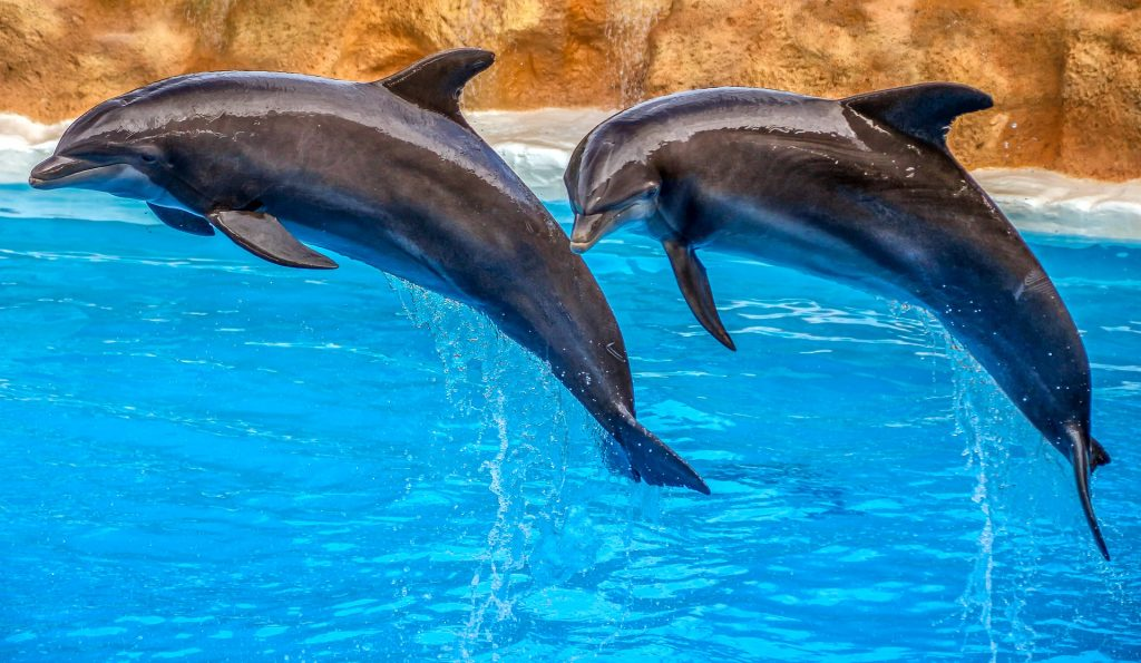 Golfinhos Delfinário