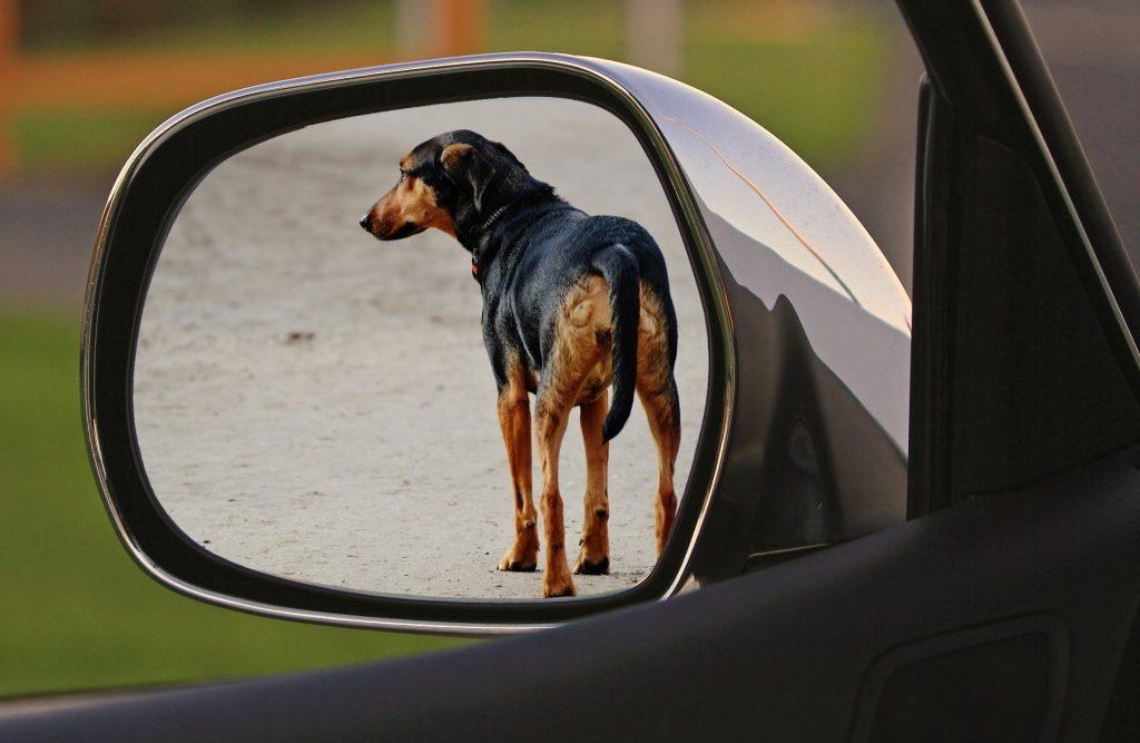 Cão Abandono Crime